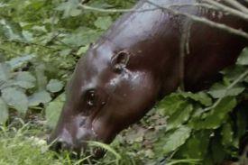 Réserve de faune du N'zo