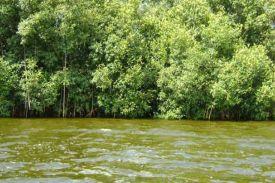 Parc national des Iles Ehotilé